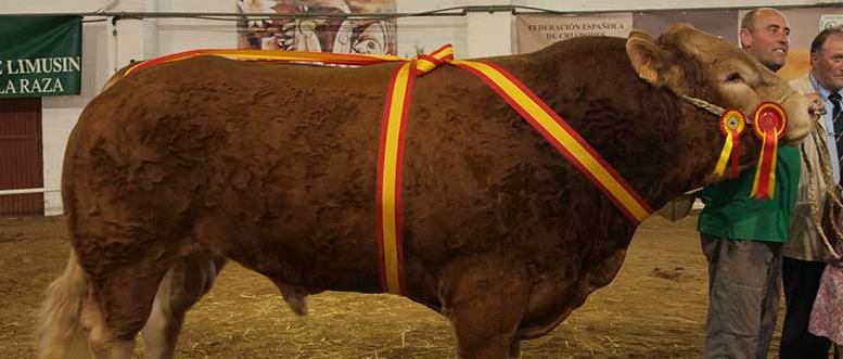 Toro Limusín
